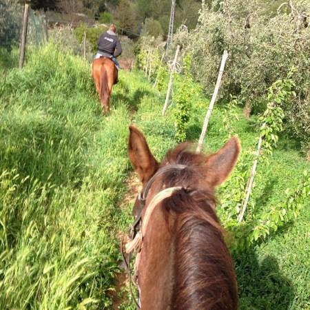 dove andare a cavallo in Toscana