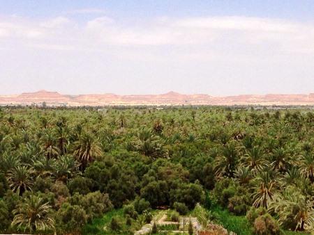 oasi siwa