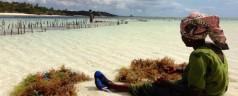 Zanzibar: cosa sapere prima di partire