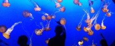 Monterey Bay Aquarium: l'acquario marino in California