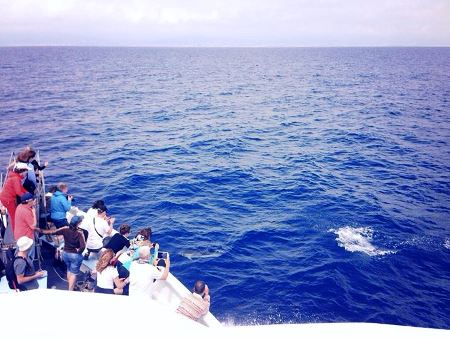 Whale Watching in Italia
