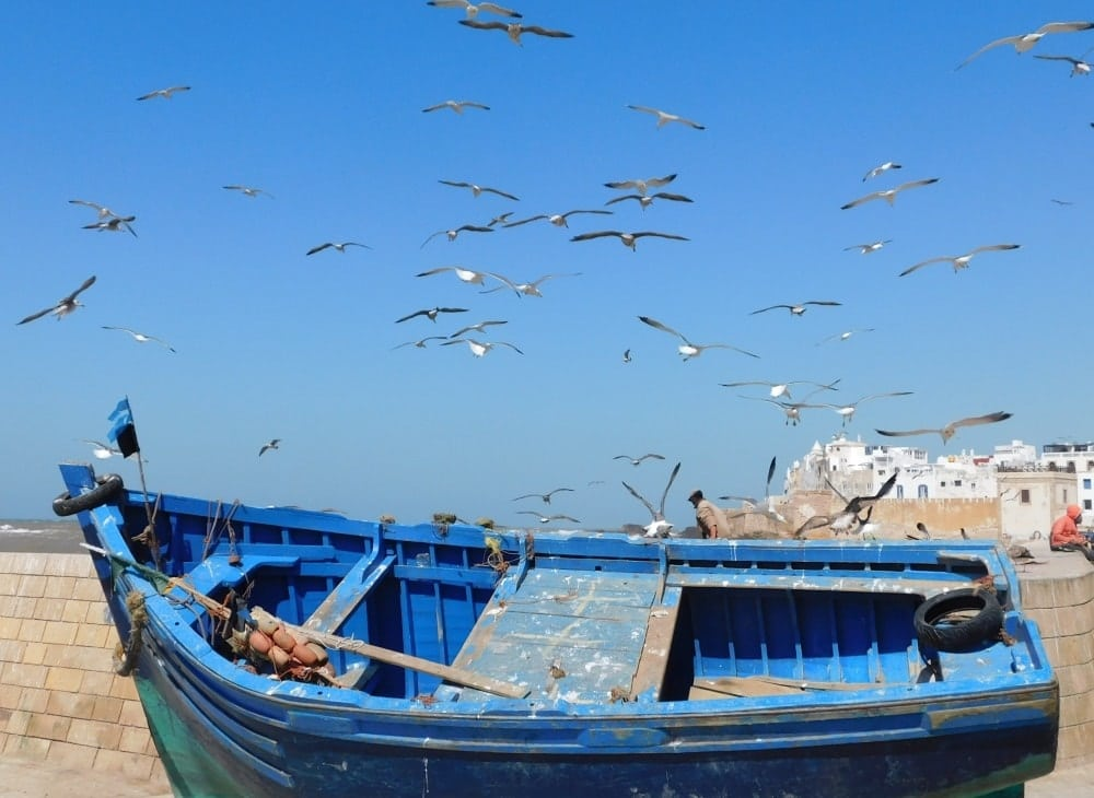 gabbiani porto essaouira marocco