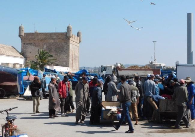mercato ittico essaouira marocco