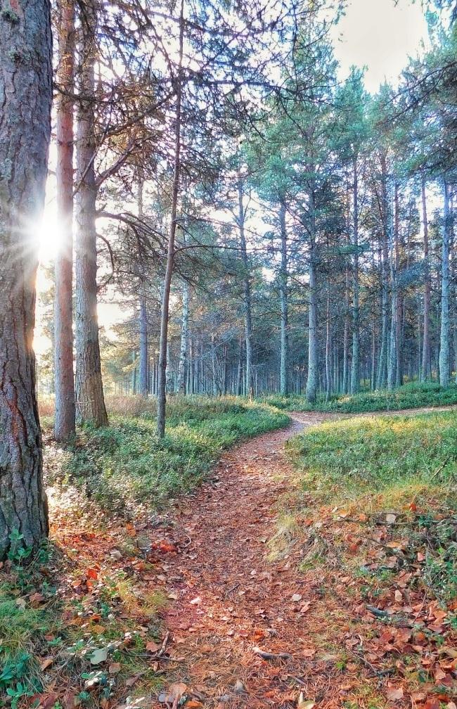 bosco inari finlandia
