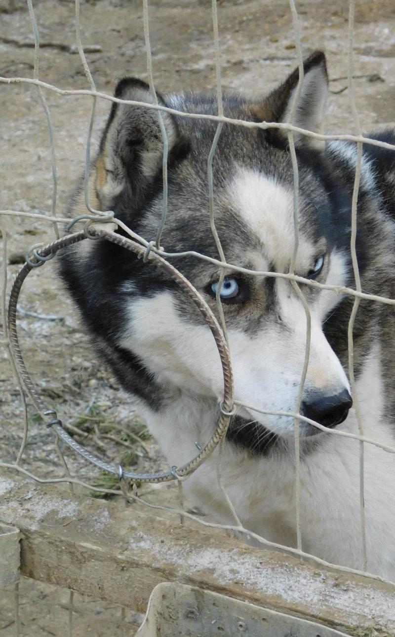 Husky Farm Inari Finlandia