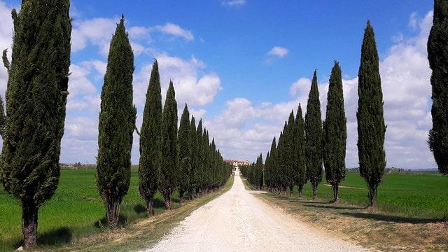 cipressi Borgo Beccanella