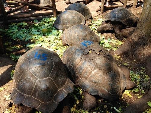 tartarughe zanzibar