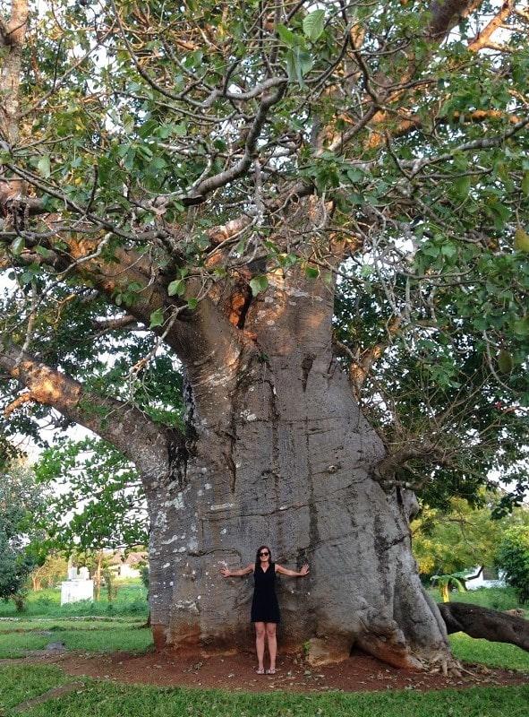 baobab zanzibar